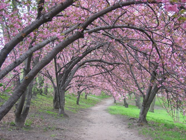 Canopy of Pink