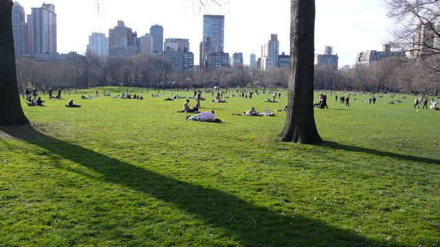 Spring Breaks in Sheep's Meadow