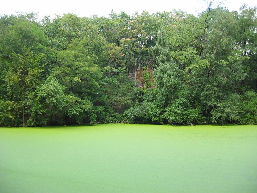 Green Lake