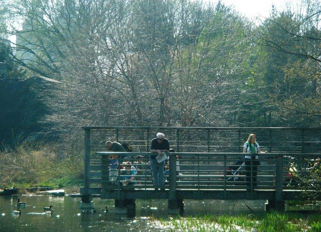 on turtle pond