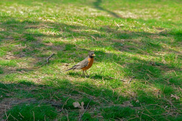 Bird in the grass