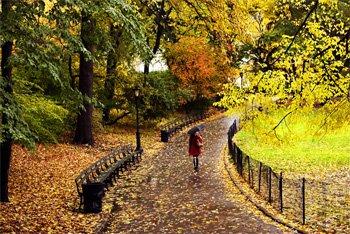 Central Park in the rain