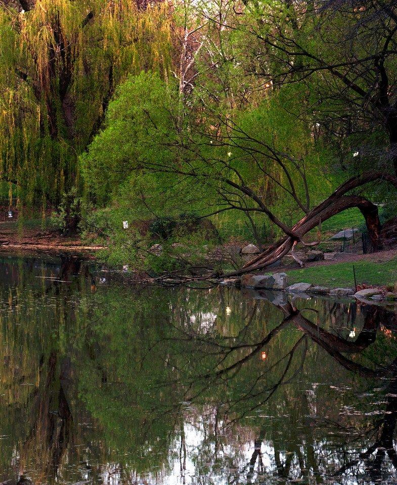 Bent Tree Reflection