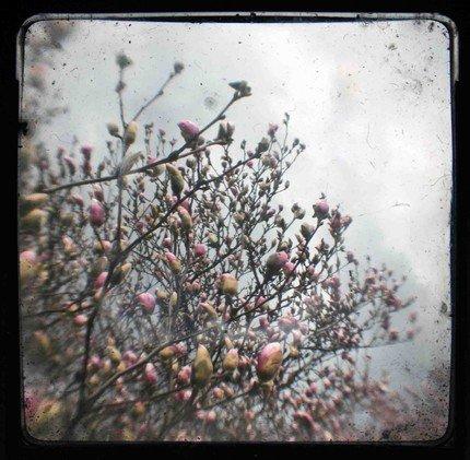 Spring Bloom No. 1 TTV