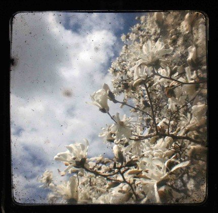 Spring Bloom No. 2 TTV