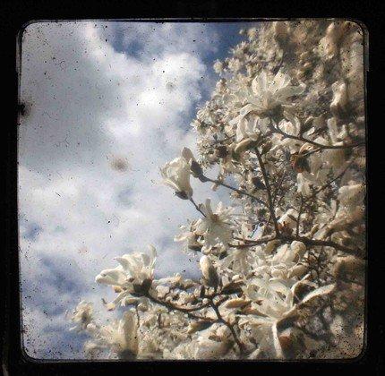 Spring Bloom No. 2 TTV