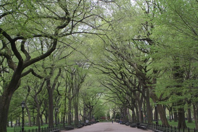 A canopy of green