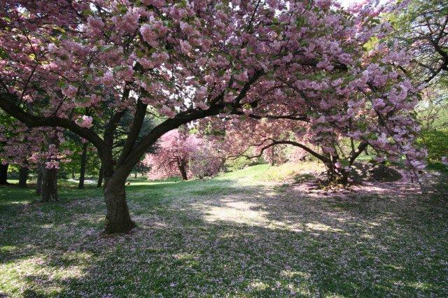 April morning in Central Park