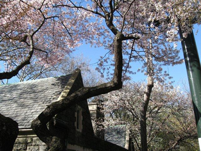 Blossuming Above