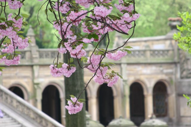 Blooming Arches