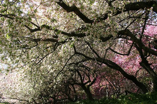 Canopy of Flowers