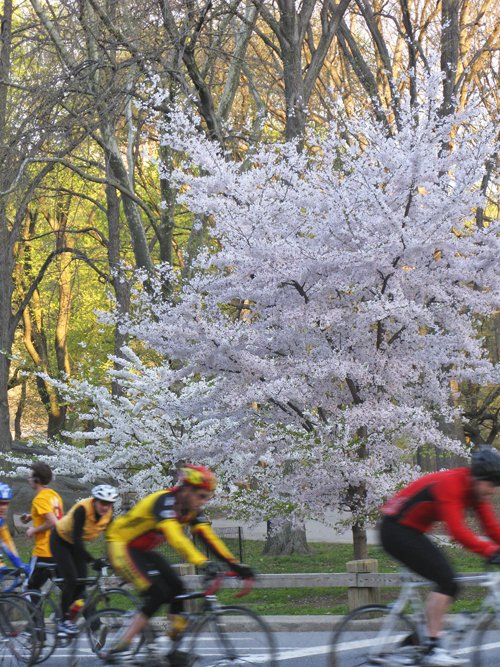 Bikers in Spring Glory
