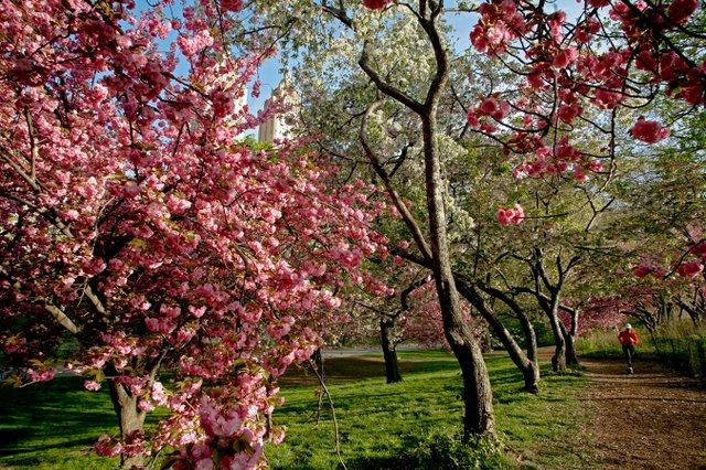 Spring burst