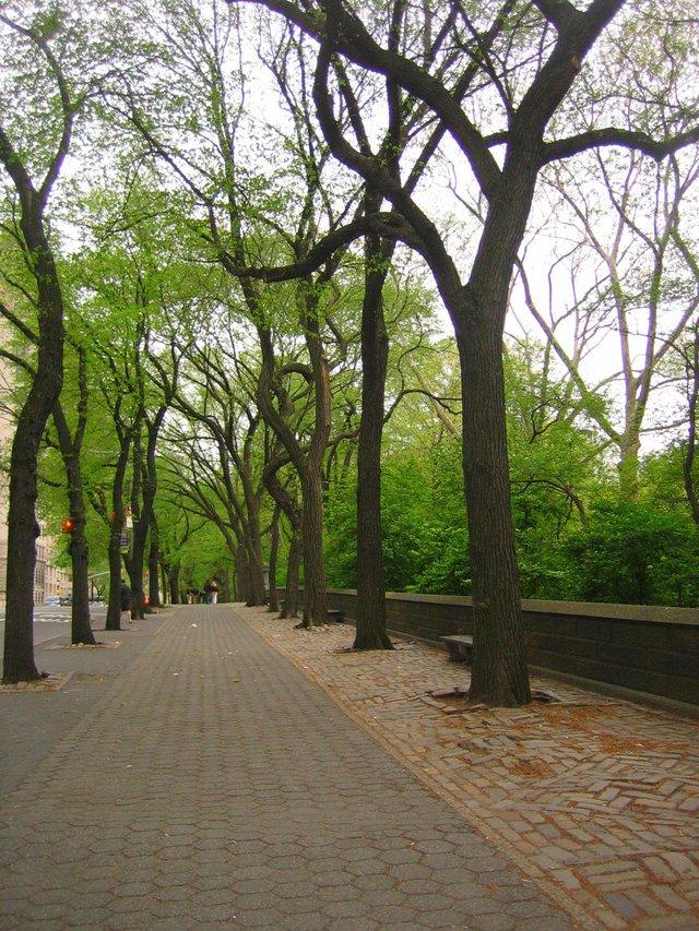 Central Park along Fifth Avenue