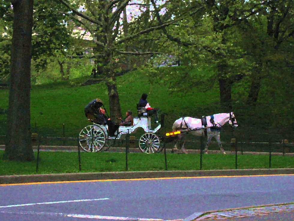 Horse & Buggy in Central Park