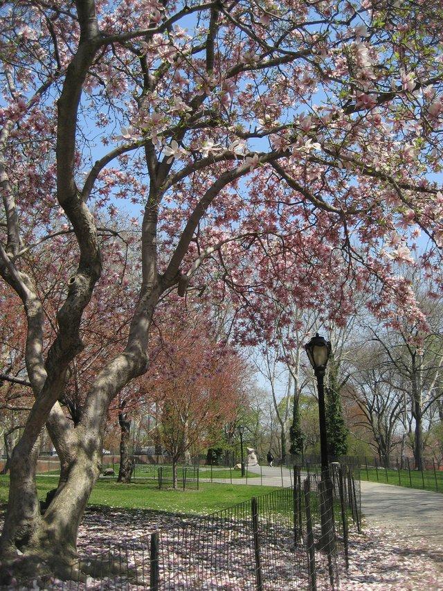 Magnolias Dreams