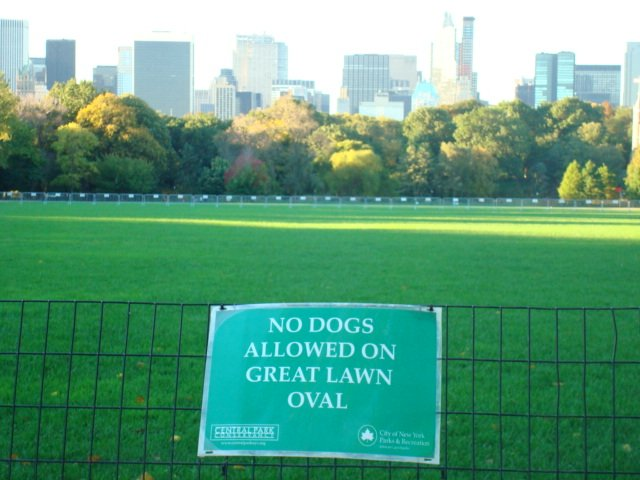 "Walking the ""Great Lawn"" oval"