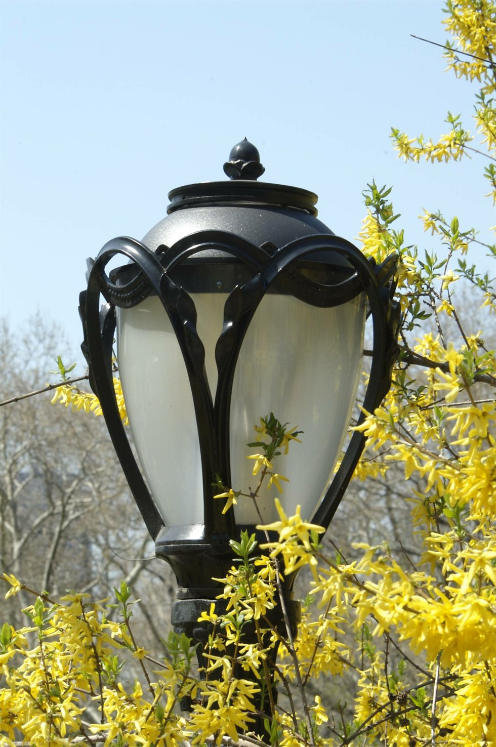 Light post in the spring
