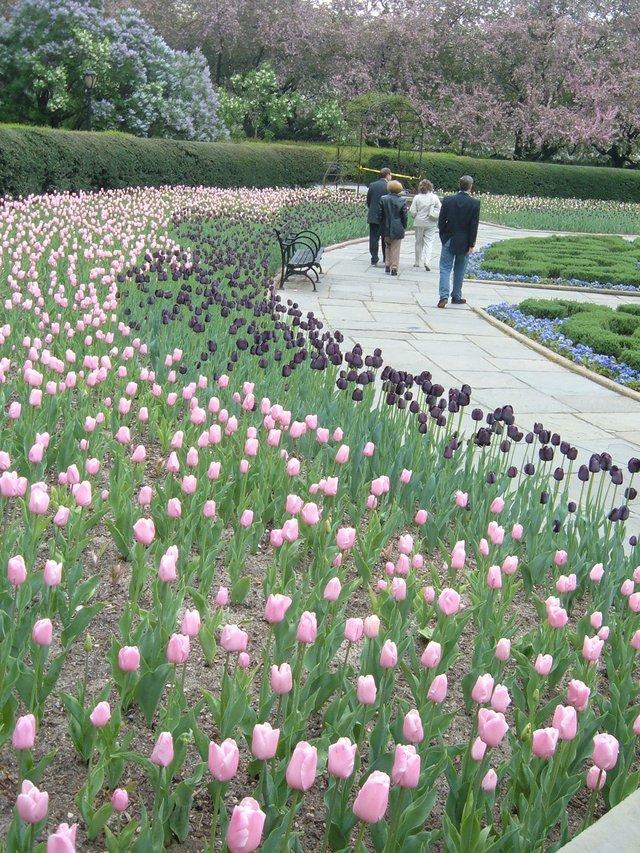 tulip path