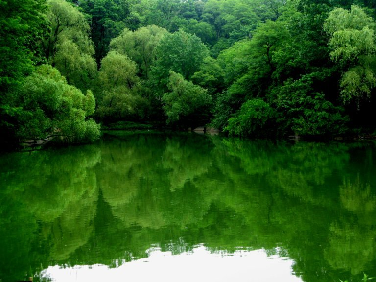 Peaceful Beauty