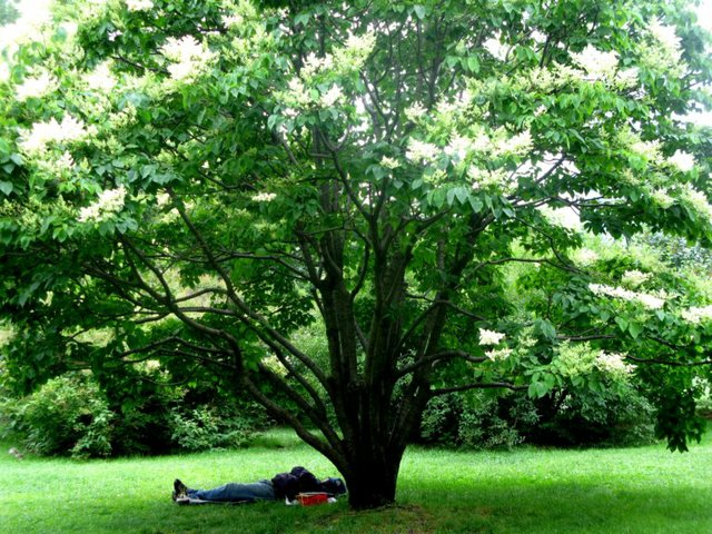 MAN RESTING UNDER THE TREE