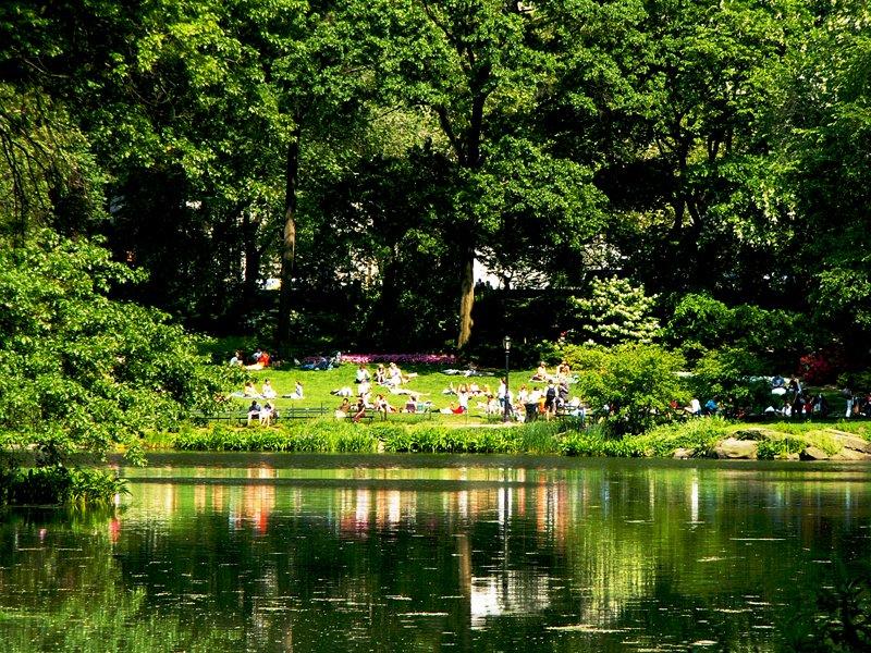 A Lazy Sunday by the Pond