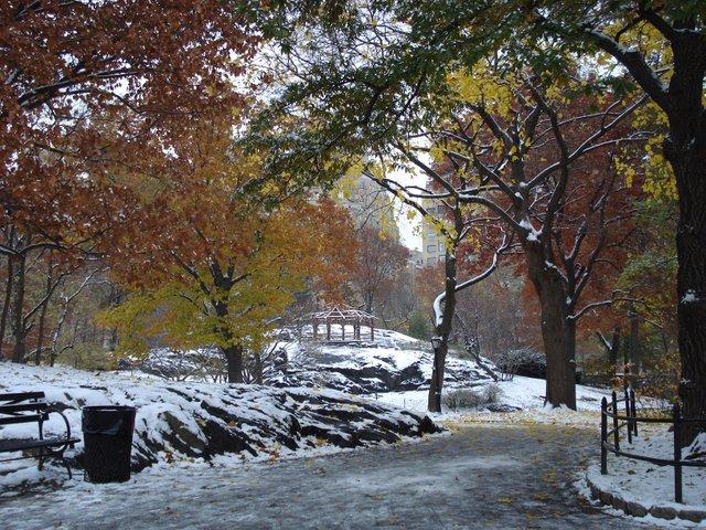 Foliage + Snow