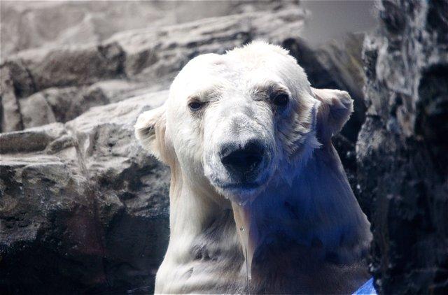 Polar stare