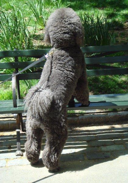 back of dog