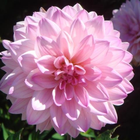 Photo entry pink flower mightylinksfo