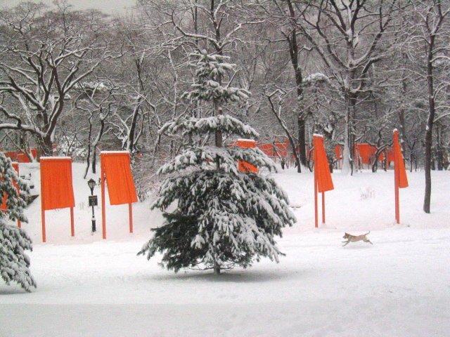 Tree Dog Gates