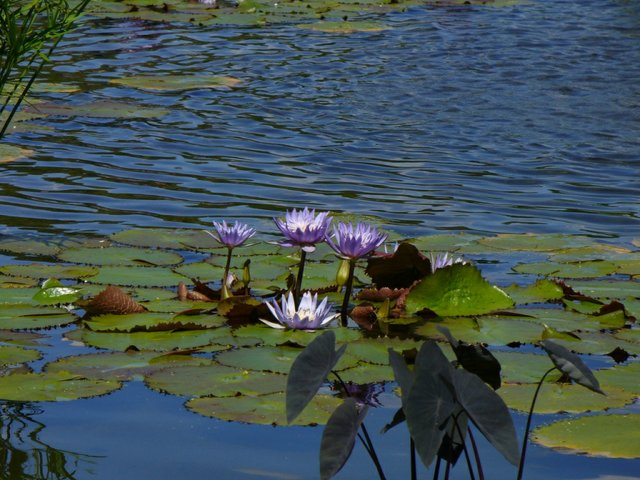 The Lilly Pad 2