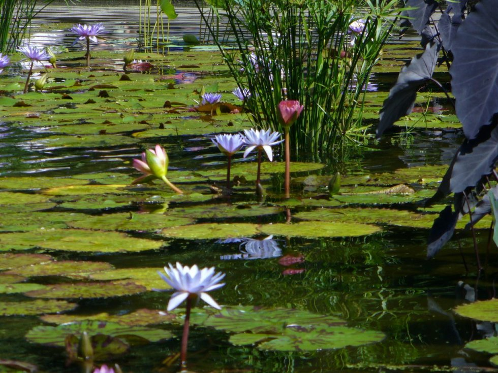 The Lilly Pad 3