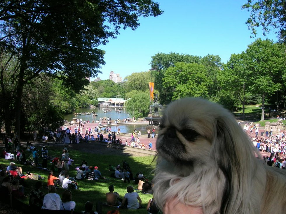 Jenny in Central Park