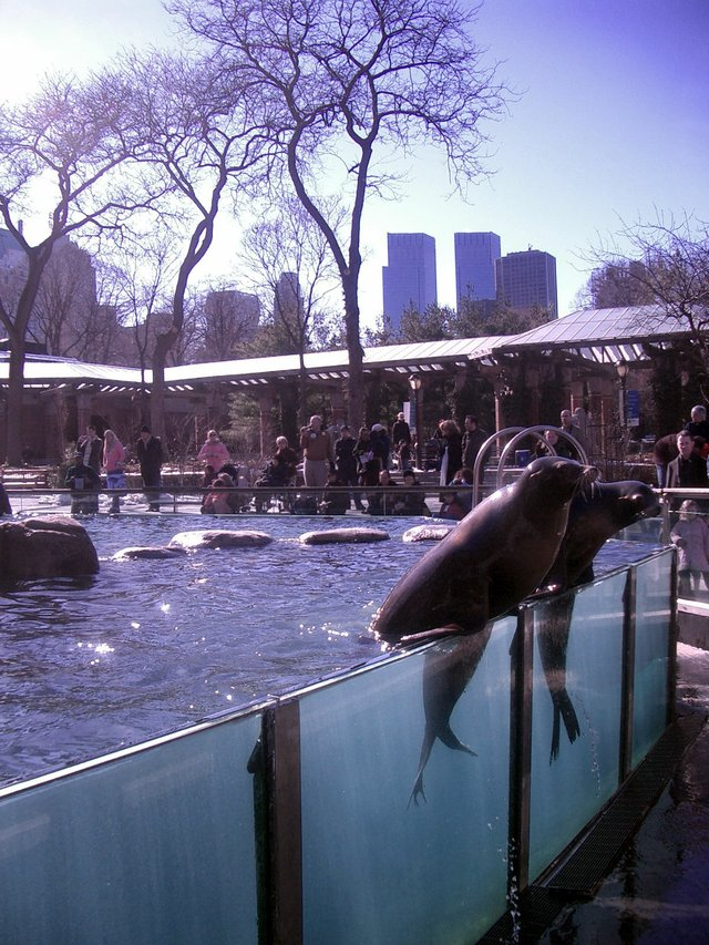 Seals in the City