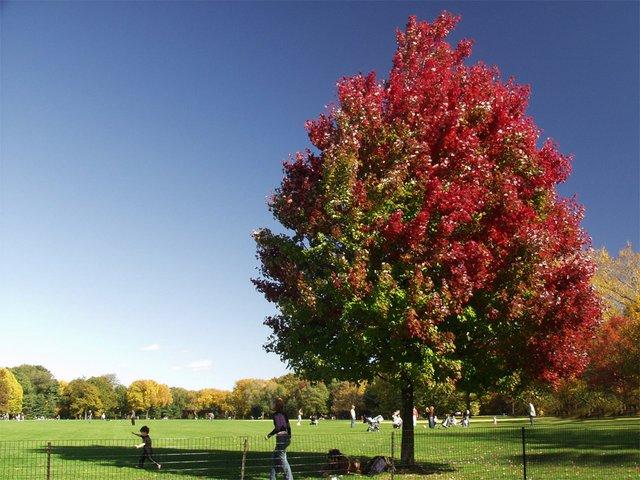 2 color tree