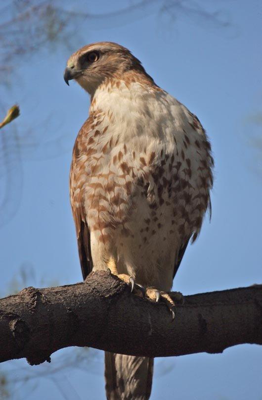 Hawk Look