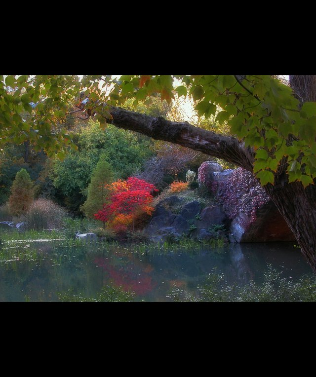 Pond Tree