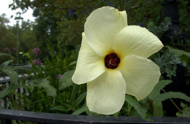 Cheery Flower