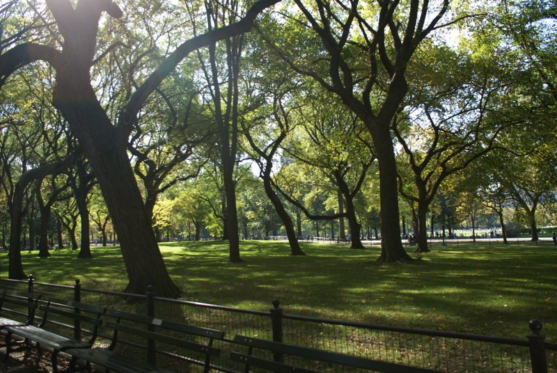 photo entry  central park trees