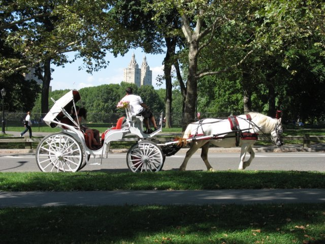 Horse carriage in Central Park