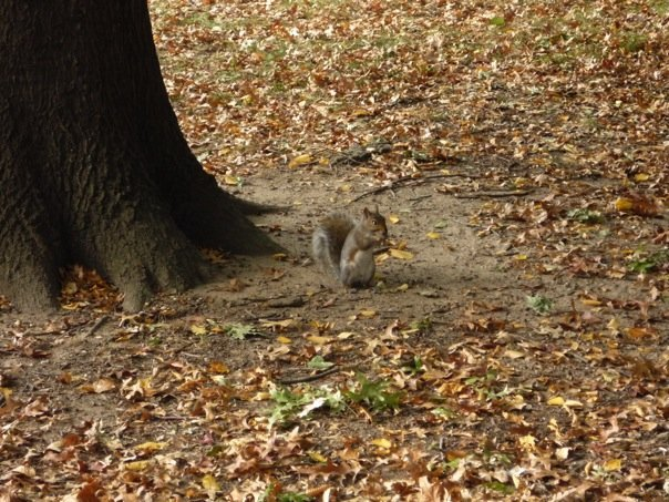 The Squirrel doesn't fall from the tree either