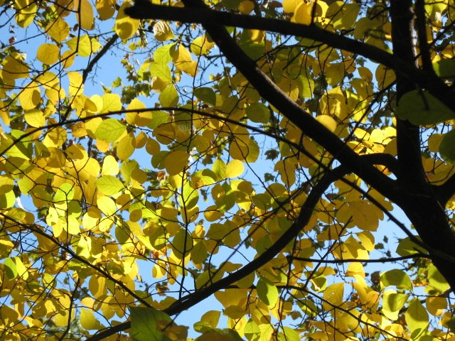 golden leaves