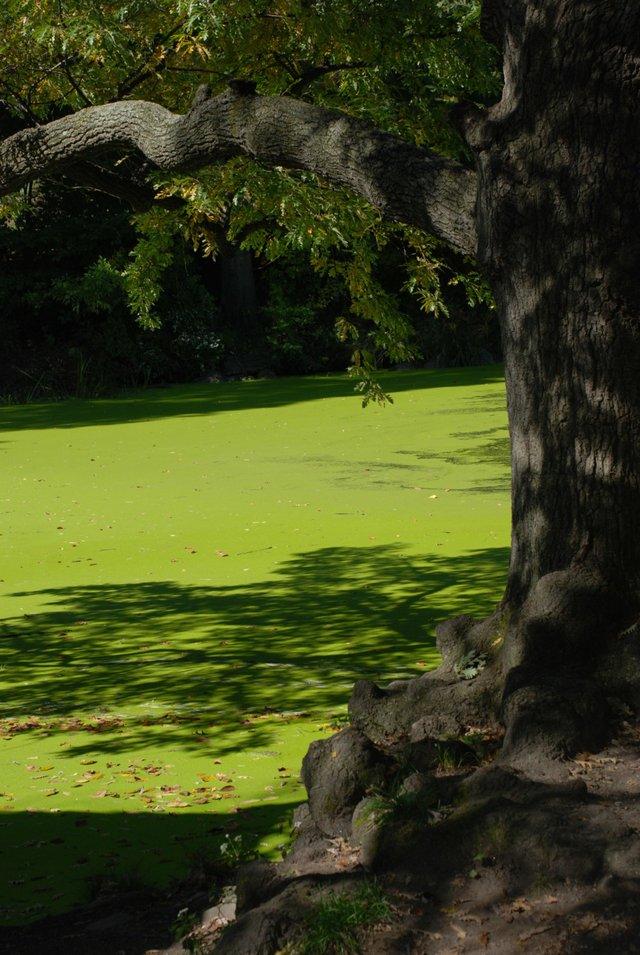 Falling to Green