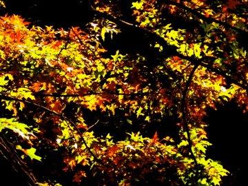 vibrant leaves