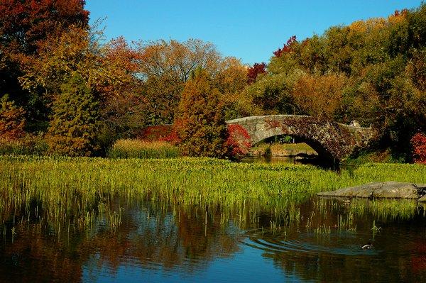 Autumn Duck Pond