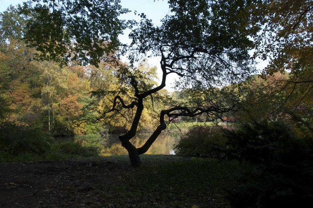 Autumn foliage in Central Park