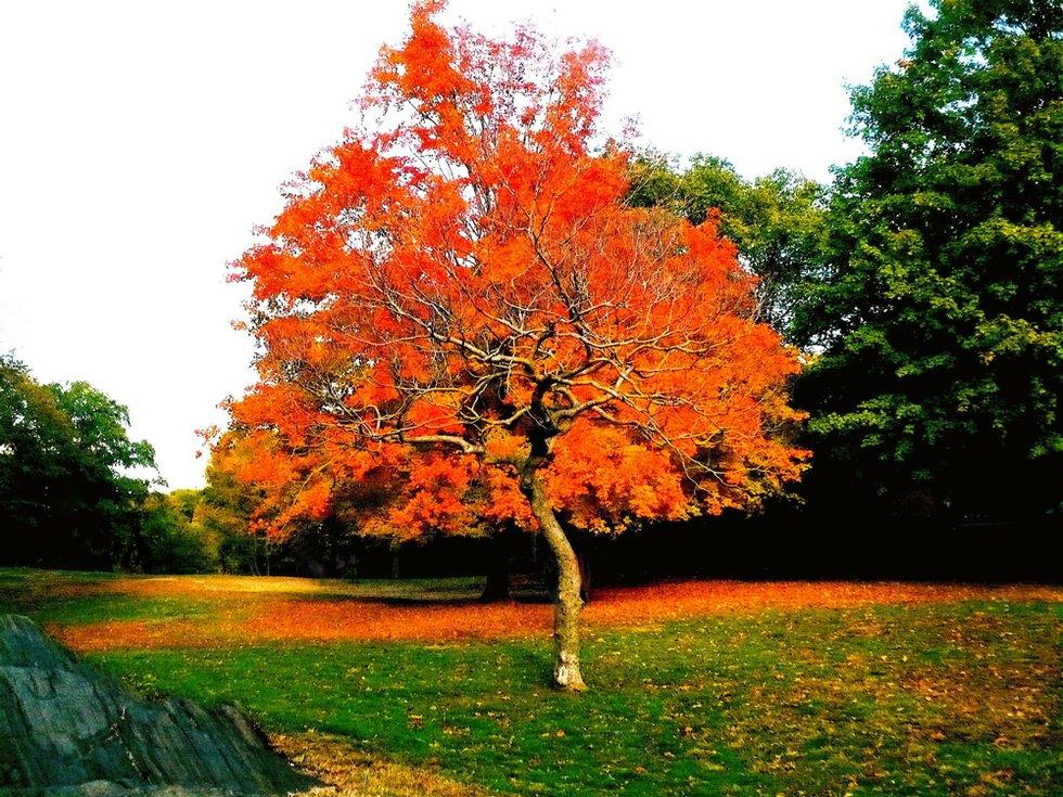 Tree Within Tree Autumn