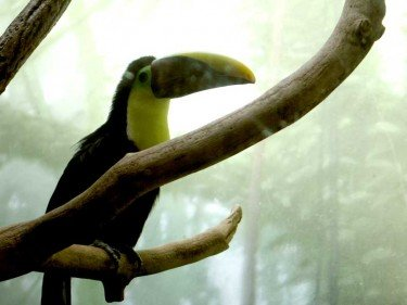 Tucan at central park zoo