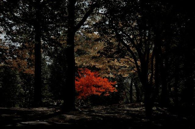 Orange Fall Loner